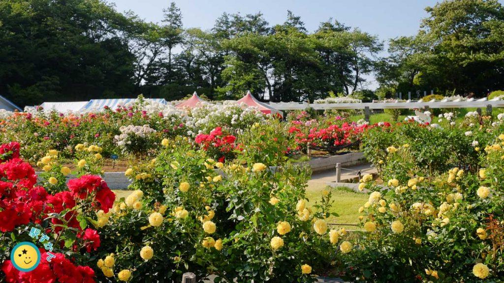 生田緑地ばら苑全景